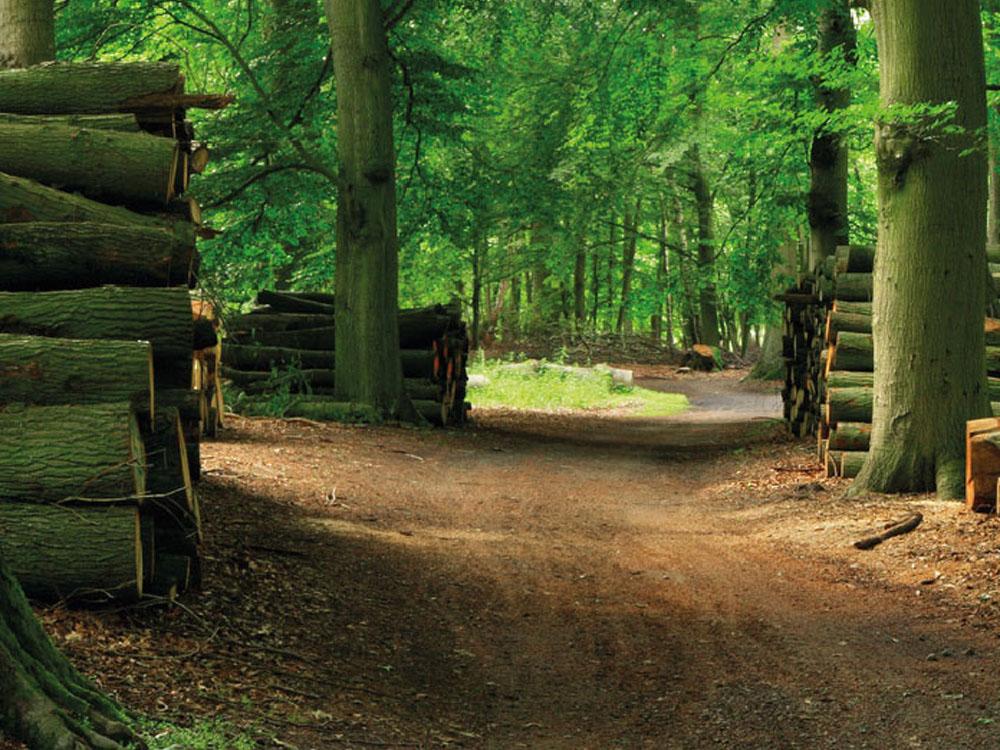 pro forêt site des entreprises de travaux forestiers de franche comté